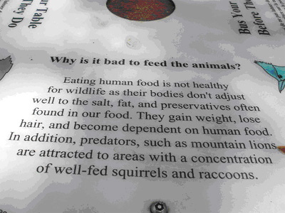 Why Is It Bad To Feed The Animals Hypnosis Health Info