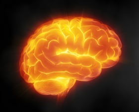 Your child's brain on fructose